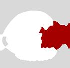 AT NET Logo